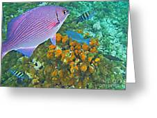 Reef Life Greeting Card by John Malone