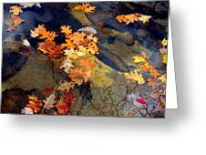 Reflection Greeting Card by Marcia Lee Jones