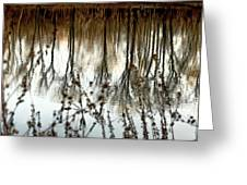 Reflections Greeting Card by Joanne Beebe