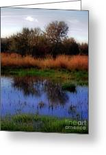 Reflections Greeting Card by Molly McPherson