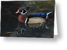 Reflective Wood Duck Greeting Card by Deborah Benoit