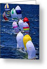 Regatta Greeting Card by M and L Creations