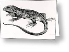 Reptile Greeting Card by English School