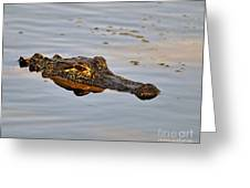 Reptile Reflection Greeting Card by Al Powell Photography USA