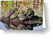 Reptile Refuge Greeting Card by Al Powell Photography USA