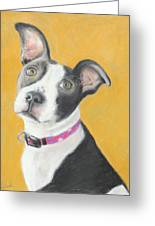 Rescued Pit Bull Greeting Card by Jeanne Fischer