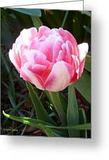 Resplendent Cherry Pink Tulip Greeting Card by Lingfai Leung