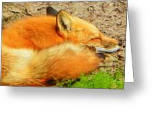 Rest Little Fox Greeting Card by Sheri McLeroy