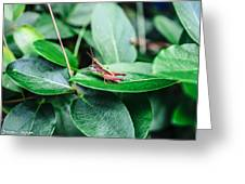 Resting Cricket Greeting Card by Steven  Taylor