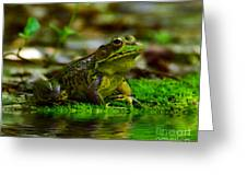 Resting In The Shade Greeting Card by Kathy Baccari