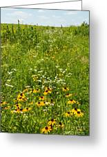Restored Tall Grass Prairie At The Herbert Hoover National Historic Site Outside West Branch Iowa Greeting Card by Robert Ford
