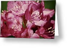 Rhode 01 Greeting Card by Donna Stiffler