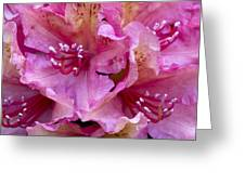 Rhododendron Brasilia Greeting Card by Frank Tschakert