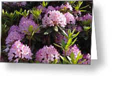 Rhododendron Greeting Card by John Baumgartner