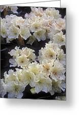 Rhododendrons Greeting Card by Anonymous
