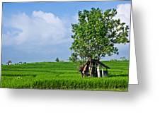 Rice Fields Greeting Card by Nila Newsom