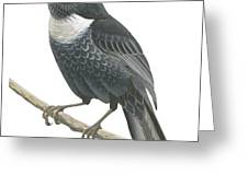 Ring Ouzel  Greeting Card by Anonymous