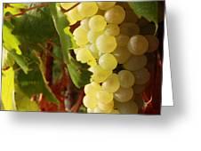 Ripe grapes Greeting Card by Alex Sukonkin