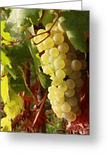 Ripe Grapes Greeting Card by Alex Sukonkin