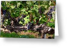 Ripening Grapes Greeting Card by Carol Groenen