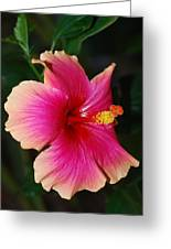 Rise And Shine - Hibiscus Face Greeting Card by Connie Fox