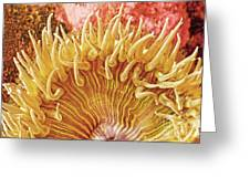 Rise And Shine Sea Anemone- Pictures Of Sea Creatures - Sea Anenome  Greeting Card by Artist and Photographer Laura Wrede
