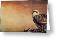 Rising Sun Greeting Card by Edward Fielding