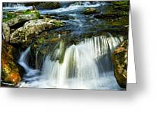 River flowing through woods Greeting Card by Elena Elisseeva