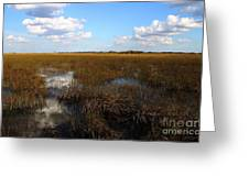 River Of Grass Greeting Card by Theresa Willingham