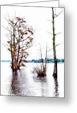 River Trees - Elizabeth City Nc Greeting Card by Dan Carmichael