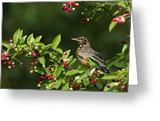Robin And Berries Greeting Card by Mircea Costina Photography