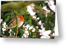 Robin Greeting Card by Dave Woodbridge