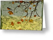 Robin In maple Greeting Card by Carolyn Doe