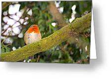 Robin On Branch Greeting Card by Dave Woodbridge