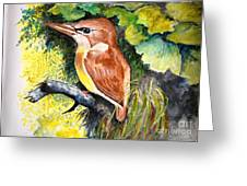 Rofous - Backed Kingfisher  Greeting Card by Jason Sentuf