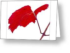 Roger's Red Grape Leaf Greeting Card by Saxon Holt
