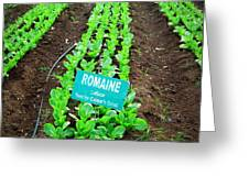 Romaine Greeting Card by GypsyBfly