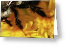Romancing Yellow Greeting Card by Linda Knorr Shafer