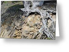 Rooted on the Edge Greeting Card by Bruce Gourley