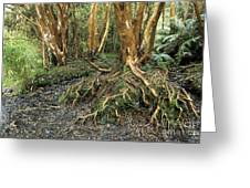 Roots Greeting Card by James Brunker
