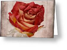 Rosa Floribunda Rainbow Sorbet Greeting Card by John Edwards