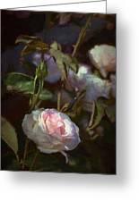 Rose 122 Greeting Card by Pamela Cooper