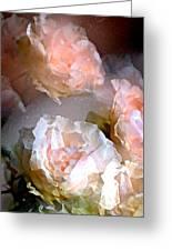 Rose 154 Greeting Card by Pamela Cooper