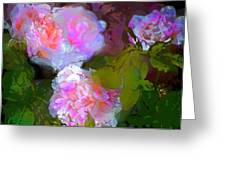 Rose 184 Greeting Card by Pamela Cooper
