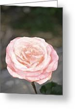 Rose 195 Greeting Card by Pamela Cooper