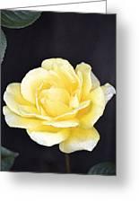 Rose 196 Greeting Card by Pamela Cooper