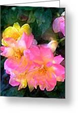 Rose 211 Greeting Card by Pamela Cooper