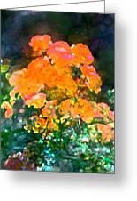 Rose 215 Greeting Card by Pamela Cooper