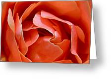 Rose Abstract Greeting Card by Rona Black