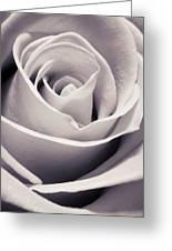 Rose Greeting Card by Adam Romanowicz